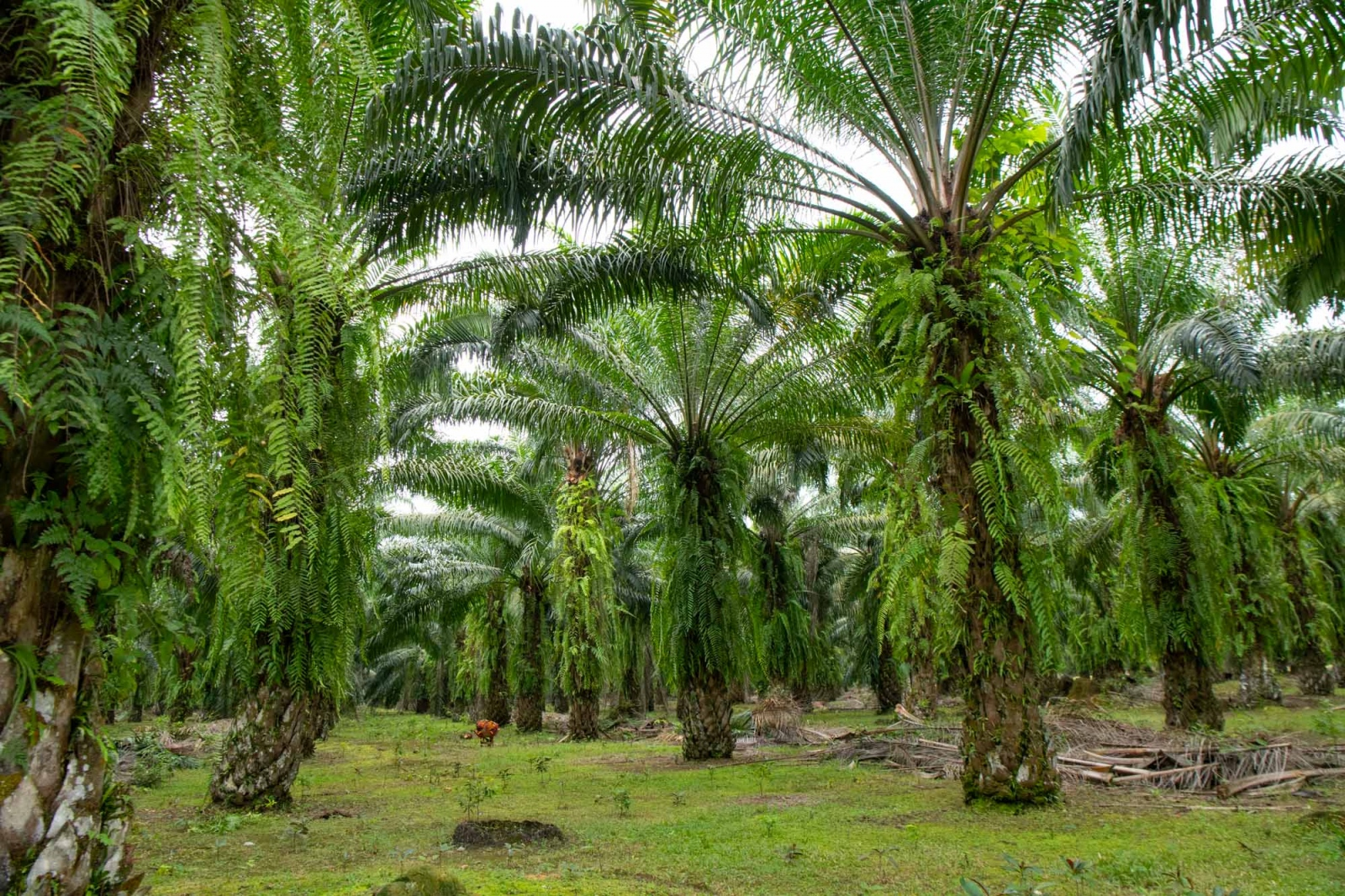 Photography image - Loading OIC-Sumatra-proj_David_Coulson-3.jpg