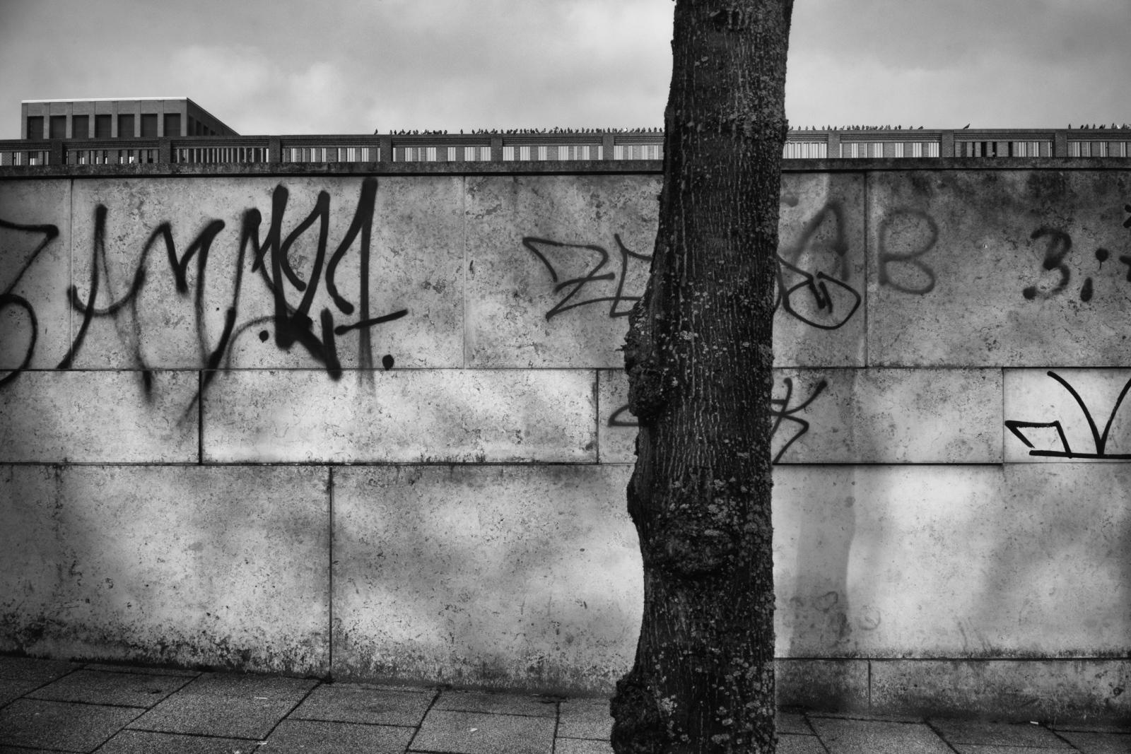 Photography image - Loading ghetto-birds-ben-kilb-15.jpg