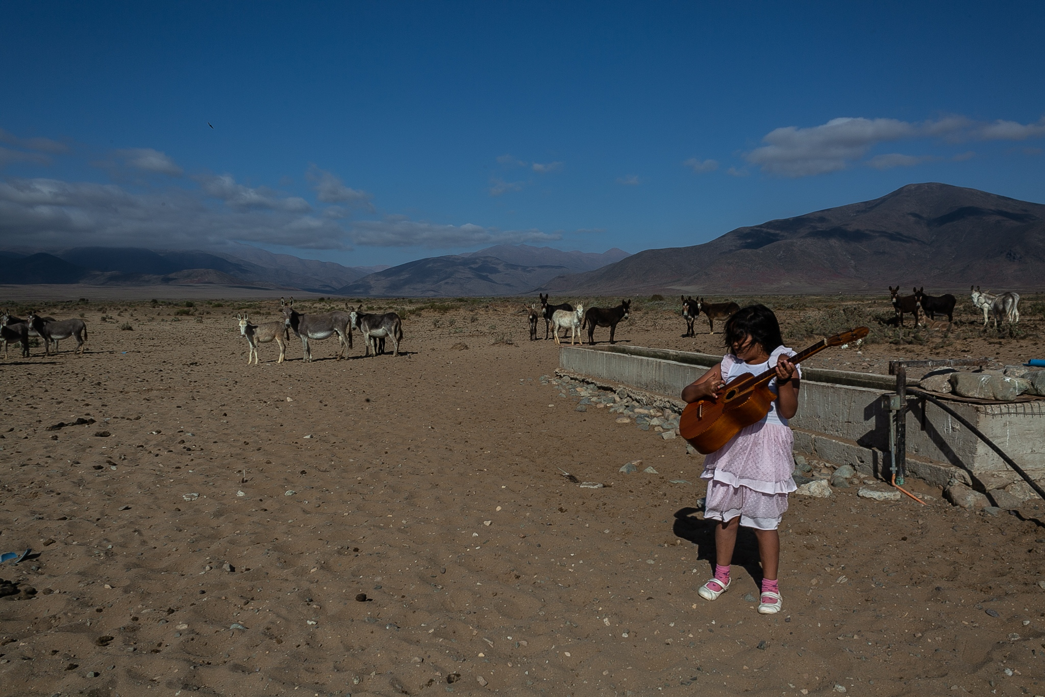 "Misol Morales (7 years old) plays guitar while waiting for his father to give water to the wild donkeys. With climate change, the region known as Chile's ""Norte Chico"" feels the advance of desertification. Areas that were once rich in vegetation are becoming large deserts. Wild donkeys are a dilemma for society. While the central government wants to end the species in order to mitigate the impacts they cause on deforestation, they are one of the few sources of economic income for local society. Los Choros, Chile."
