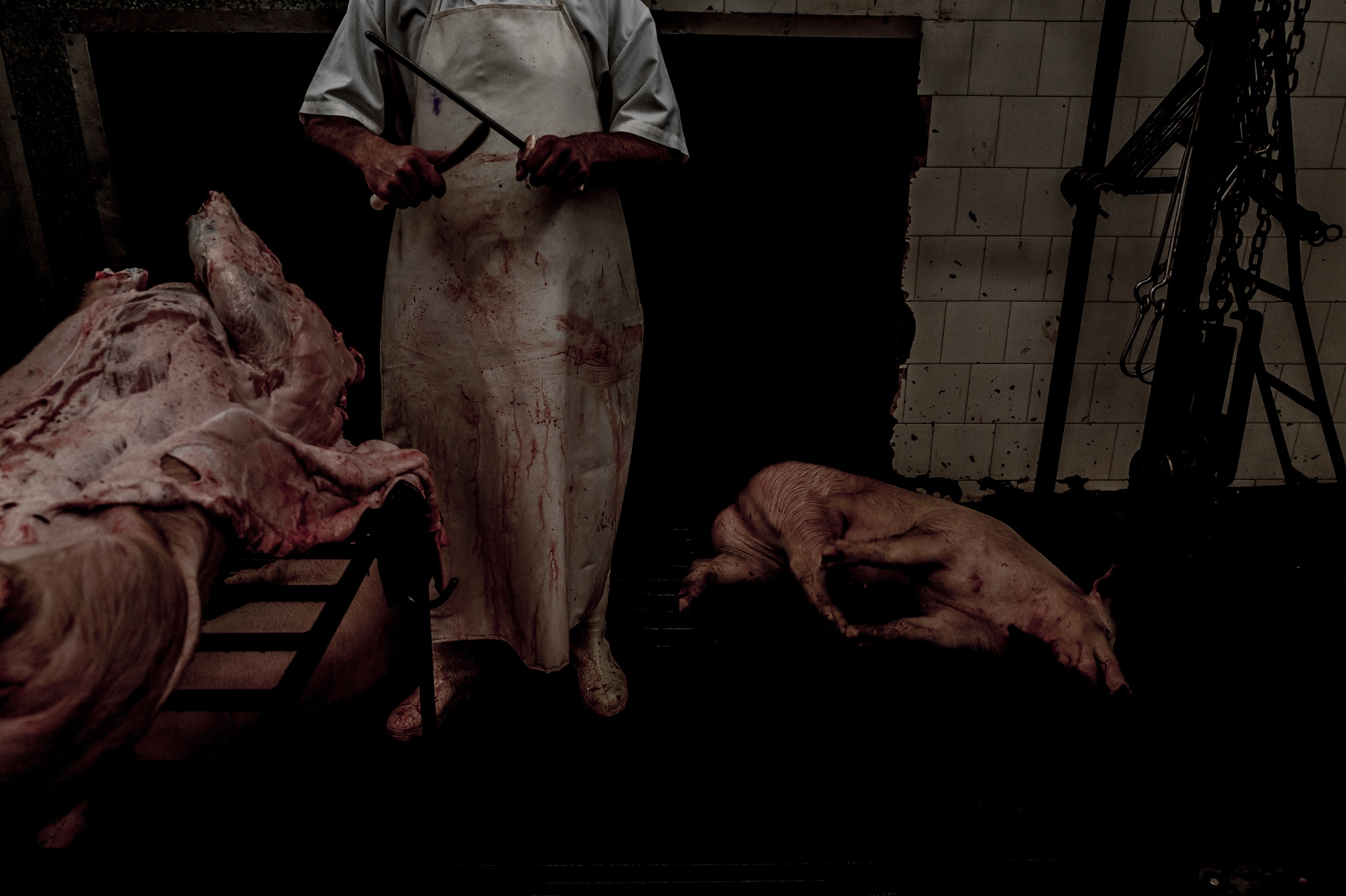 A butcher concludes the slaughter of one more pig. Food security is a major concern on the issue of climate change and the quest for products with lower global warming potential (GWP) is one of the greatest challenges for humanity. Studies show that pork has half the GWP of an ox. Cruzeiro do Sul, Rio Grande Sul, Brazil.