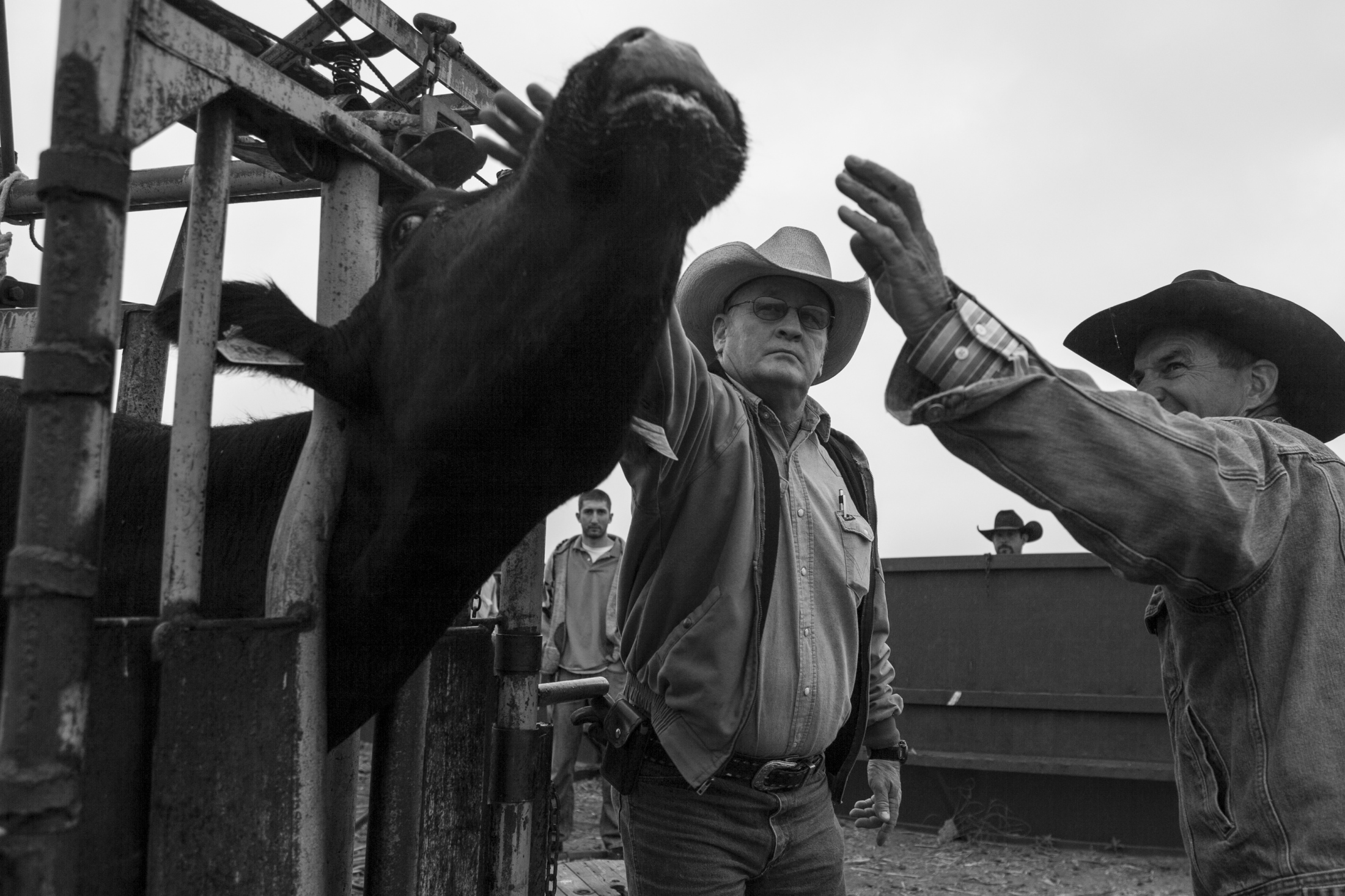 Windell Treadway and Ethan Fuchs inspect each cow before the new buyer arrives to pick up the cattle.