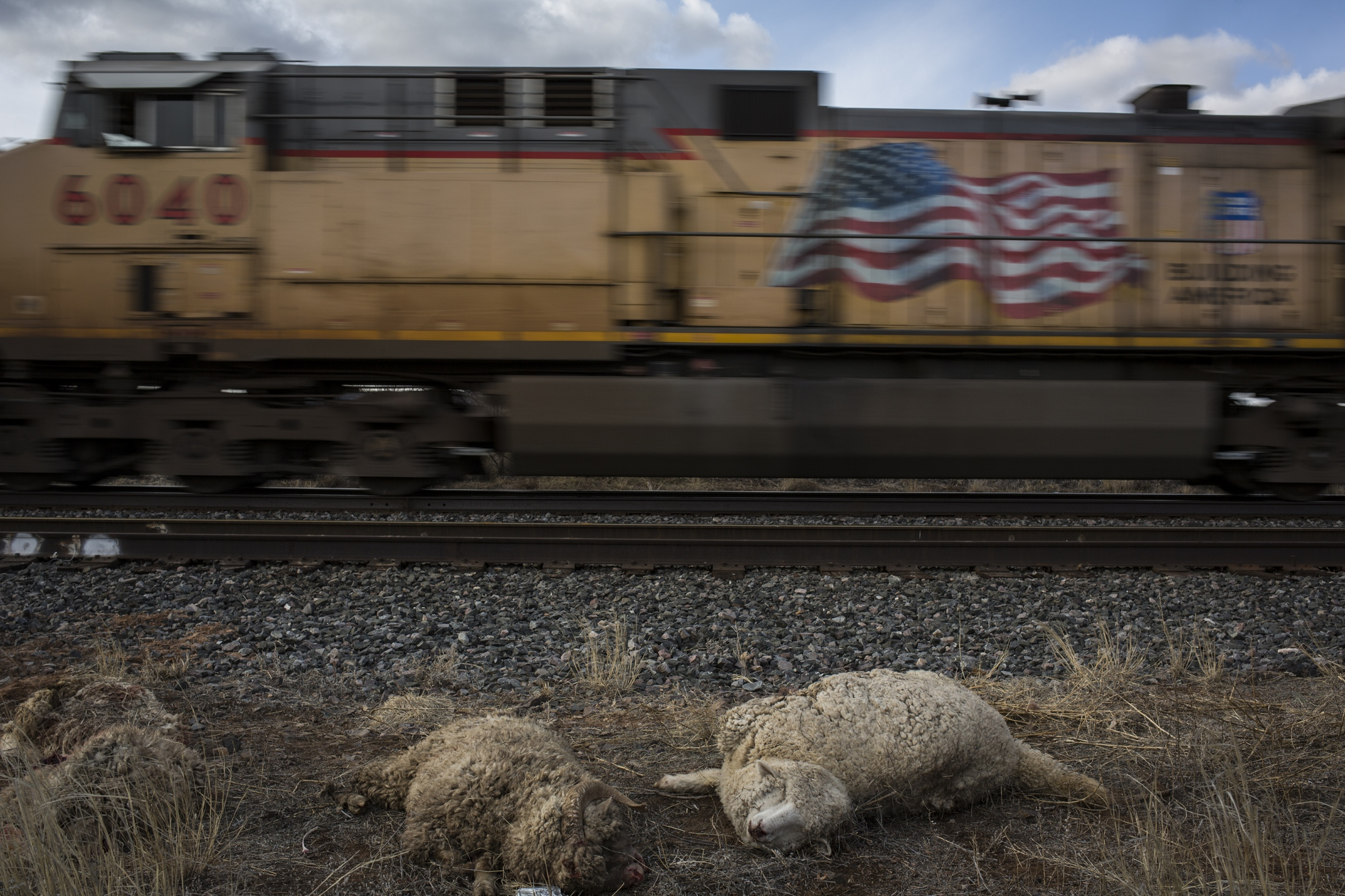 Dead sheep lay next to the rail road in the village of Pastura, just south of Santa Rosa, as a train passes by. Seven sheep were hit by another train that passed through.