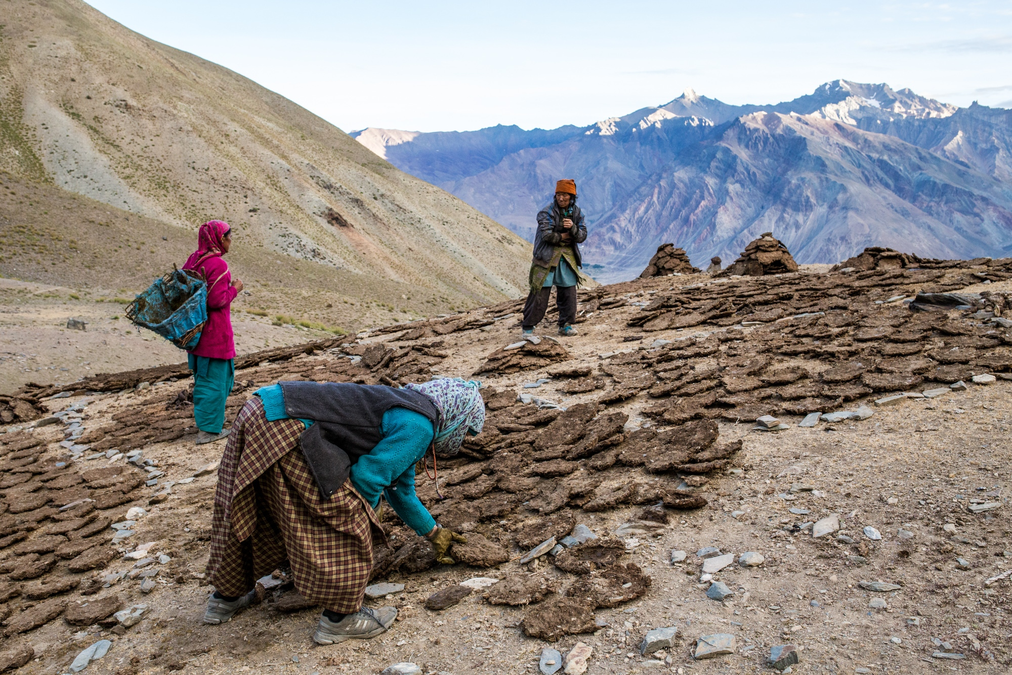 Women in the Zanskar Himalaya, India, organise dried dung cakes during the short summer months in preparation for winter, where they will use it for both cooking and heating fuel.