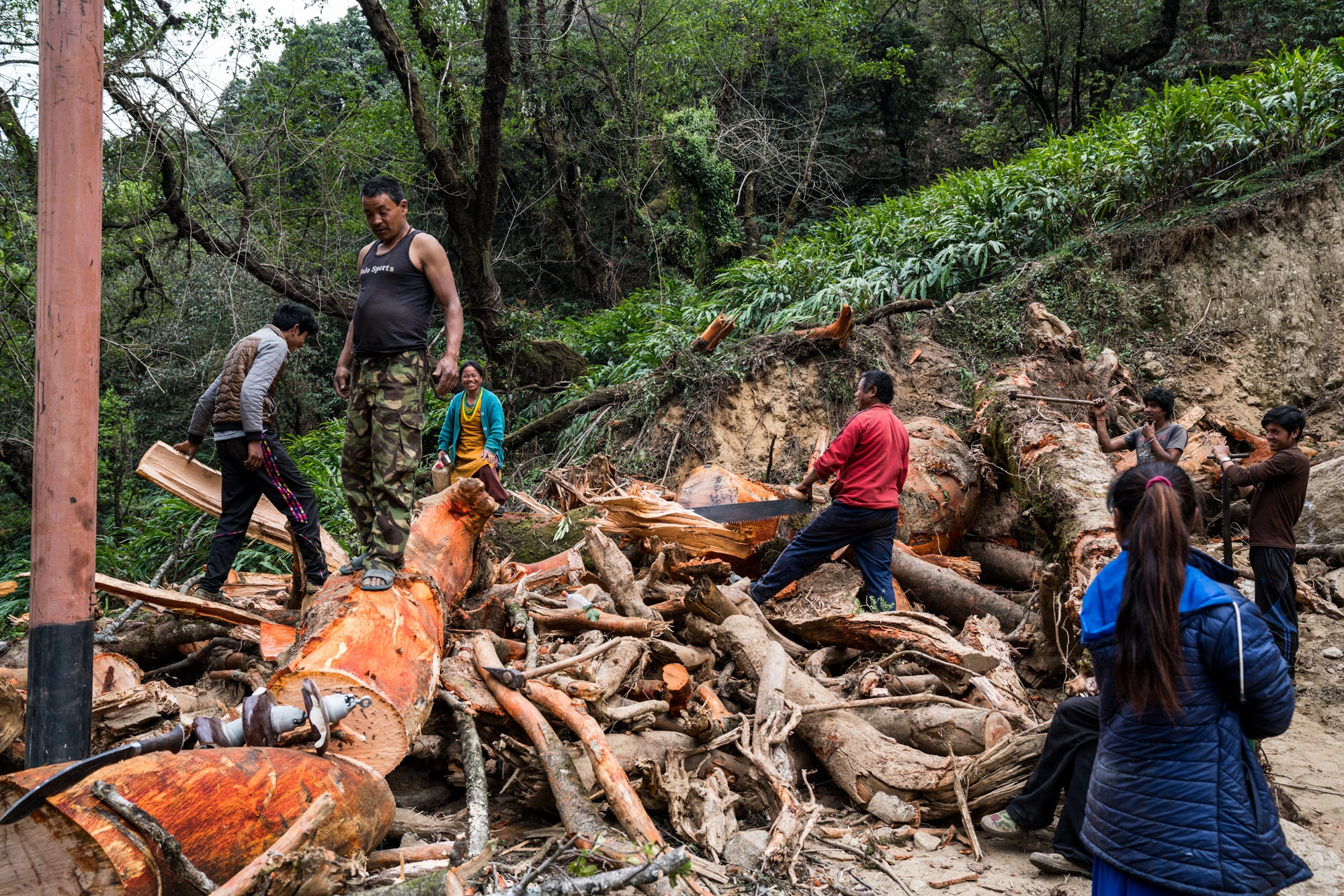 Men and women cutting down sub-tropical forests on the Himalayan foothills of Nepal, which will then be distributed and used as cooking fuel.