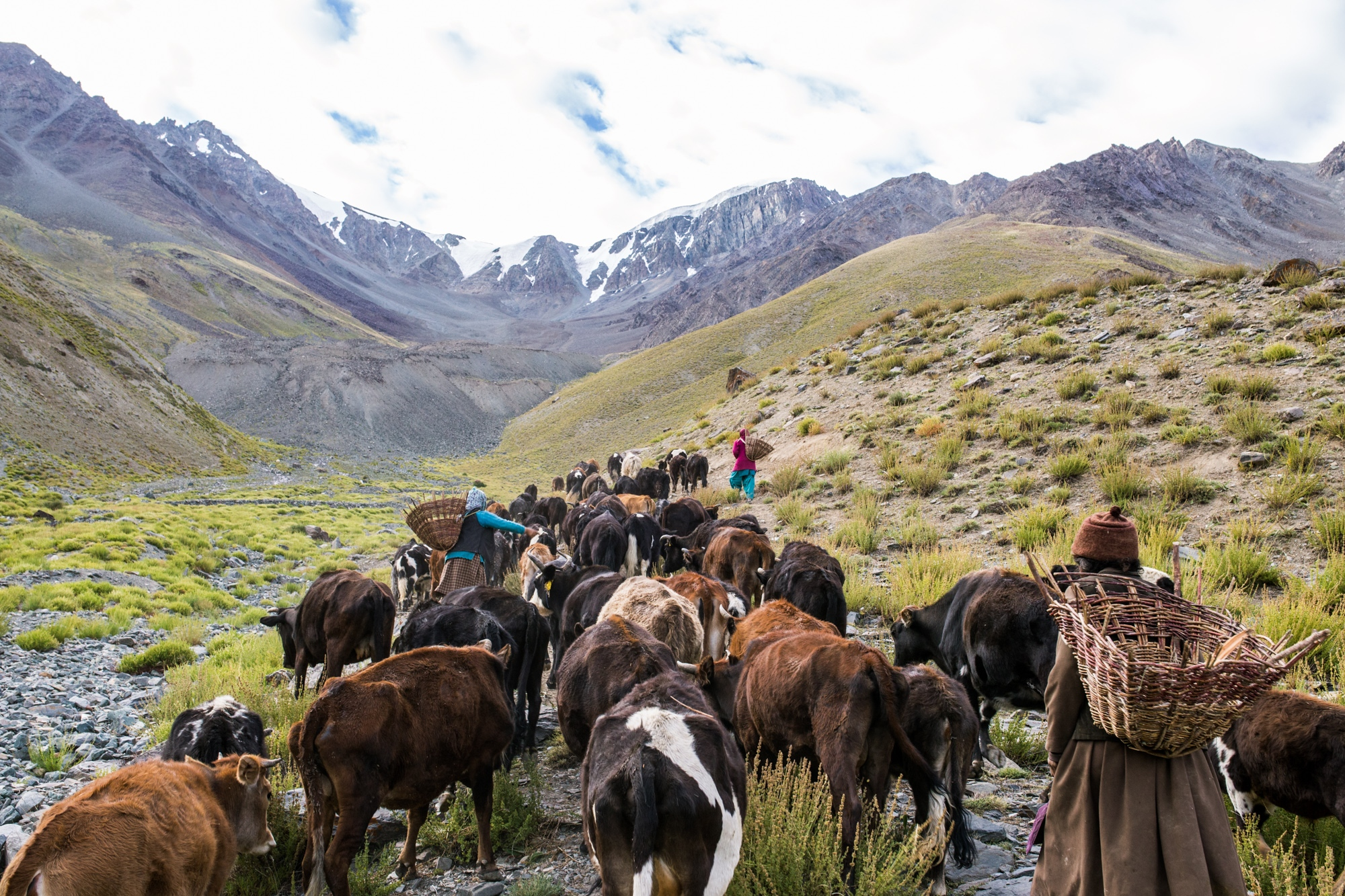 Taking the cows up to the high grazing grounds; the women of Kumik stand below what was once the glacier that provided the village with water. The glacier has completely retreated due to black carbon's and climate change's warming impacts.