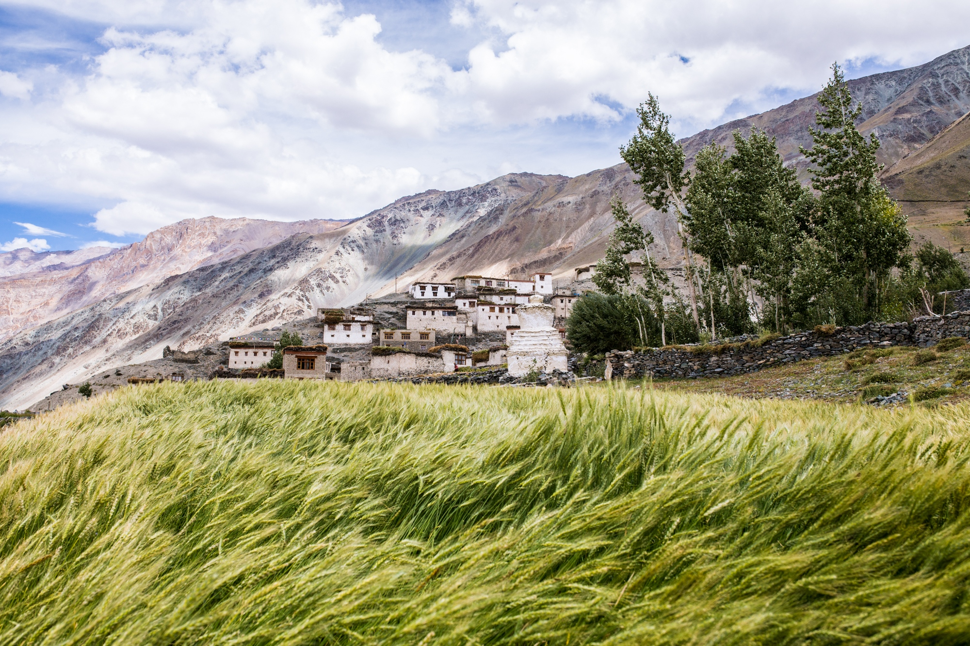 Wheat crops blow in the wind in the village of Kumik, India. Kumik has lost their glacier, once their main source of water, due to black carbon and climate changes warming impacts. Crop yields have significantly decreased with the reduction in water.