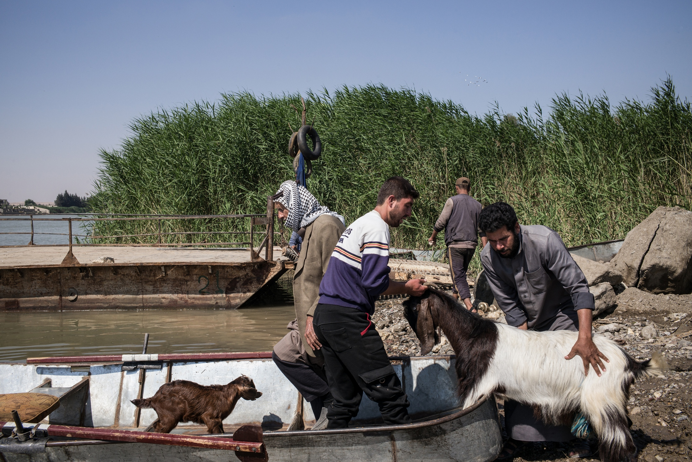 Men load livestock onto a small boat on the north bank of the Euphrates River in Raqqa, Syria, on Monday, May 14, 2018. The destruction of vital infrastructure in the city has forced civilians to use flimsy barges and boats to cross the Euphrates River that divides the northern and southern parts of the city to trade their livestock and crops. Some barges have sunk in recent months, killing at least half a dozen people. As the former capital of ISIS's so-called caliphate, Raqqa is struggling to get back on its feet - free from the Assad regime and ISIS - through an alliance of Kurdish and Arab representatives and its military wing (the Syrian Democratic Forces) and with little assistance from NGOs and foreign donors.