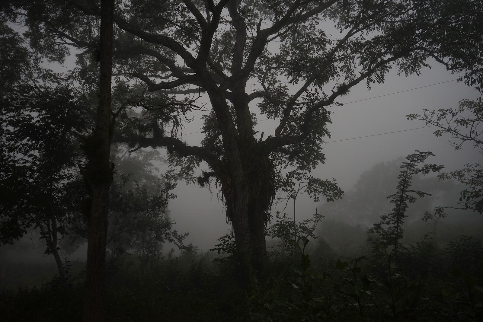 Madrugada en el el Bejuco, Ozuluama, Veracruz...
