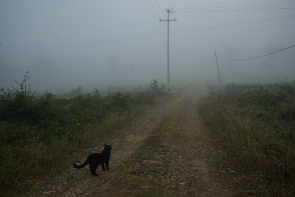 Morning walk with cat, Rancho  Bejuco,...