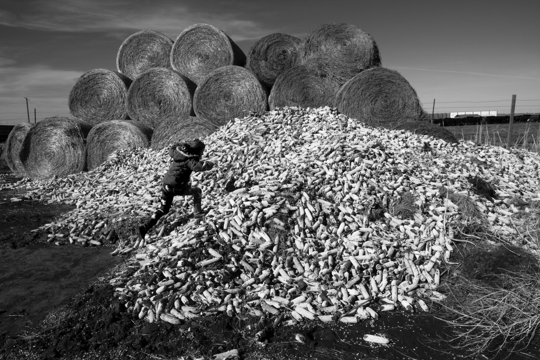 Art and Documentary Photography - Loading Ranching020.jpg