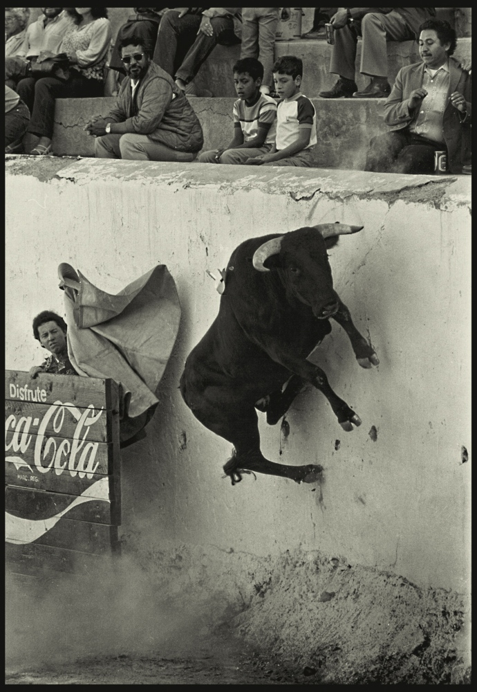 Bull in flight, Nogales, Sonora, Mexico.1980.