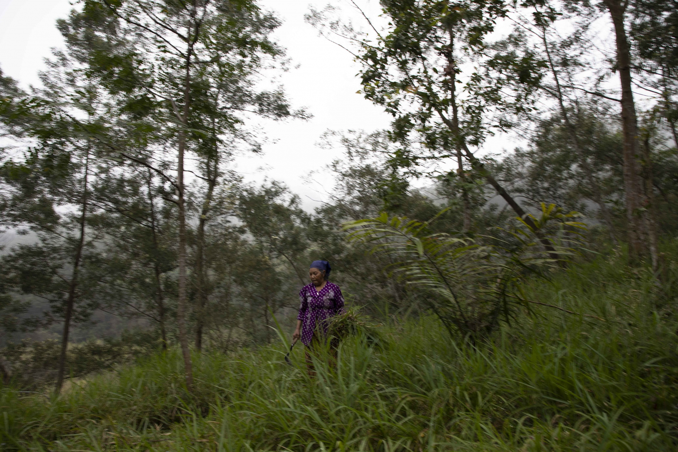 Mbah Sudiwiyono walking through the deep forest that surrounds her house. Each morning she collects cress for her two goat and the fire she lights to make charcoal.