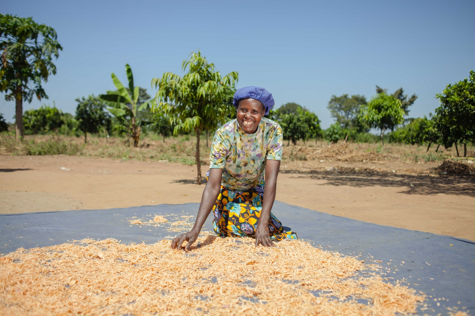 Kokoi sun dries the harvested sweet potatoes from her garden in Soroti, Eastern Uganda. Farm Africa's Orange Sweet Potato Project is helping farmers like her produce, process and sell high-quality orange sweet potatoes and also teaches them how to add value to their potatoes by chipping and drying them, so they can be stored and sold after harvest time when the market isn't flooded.  For Farm Africa