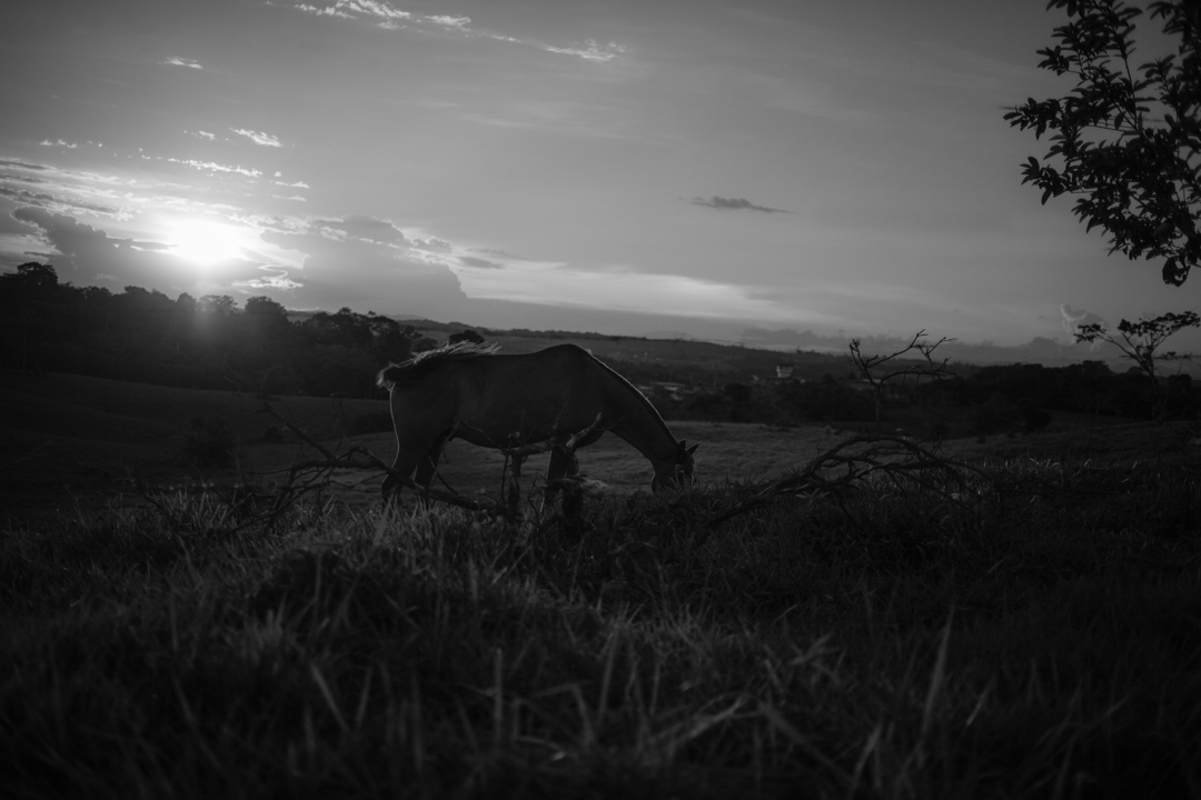Photography image - Loading JuanchoToresColombia_cowboys-27.jpg