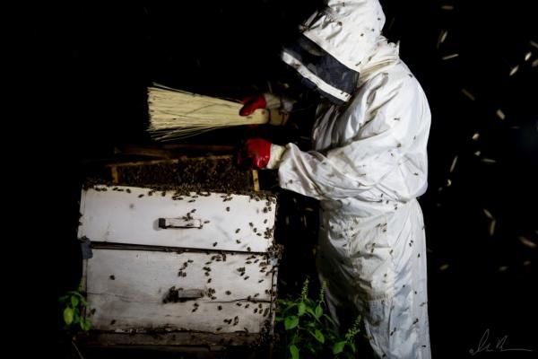 Upendo- Farmers & Beekeepers