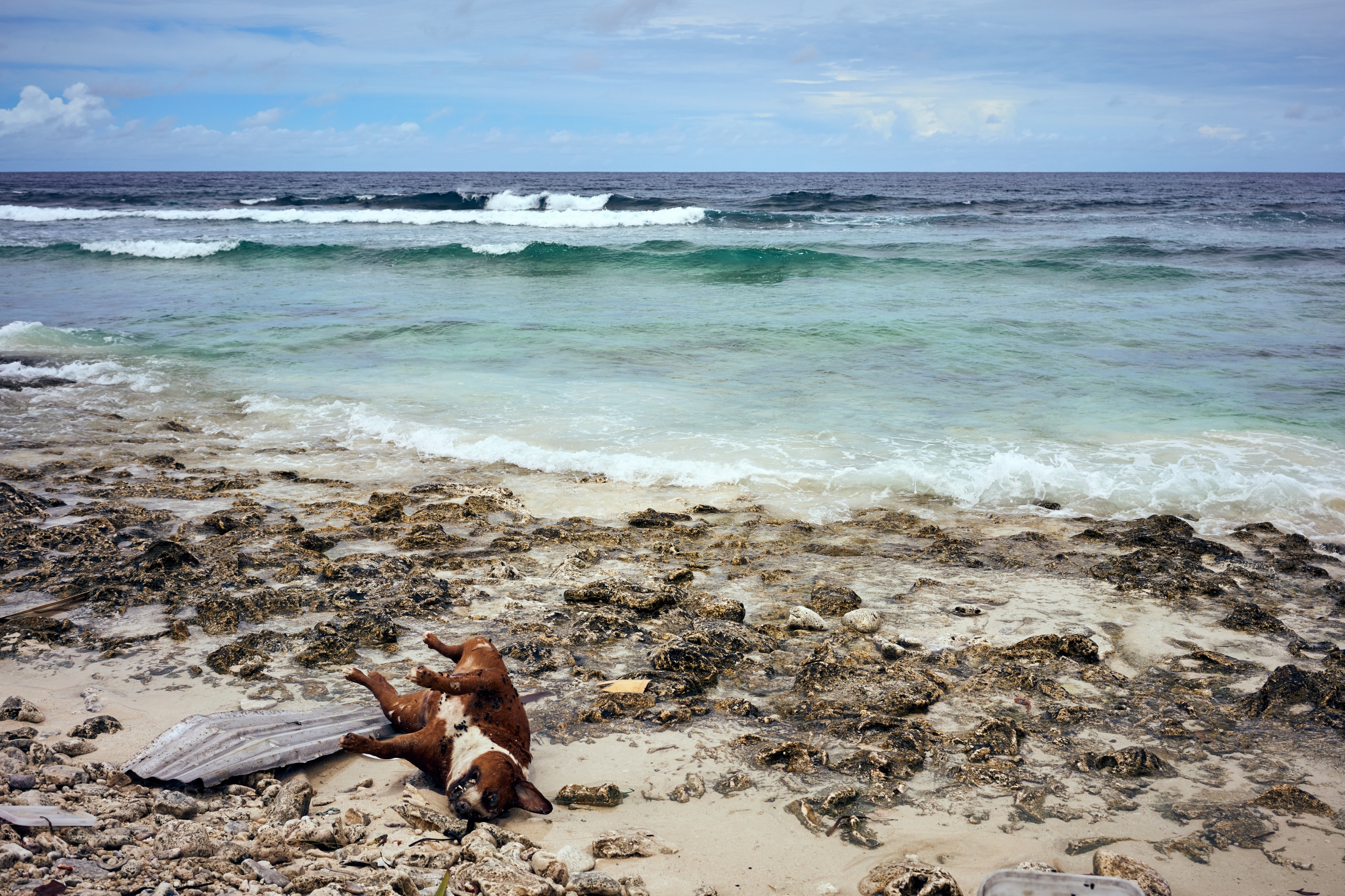 A dead dog on the shore near the end of Tuvalu's airport runway.