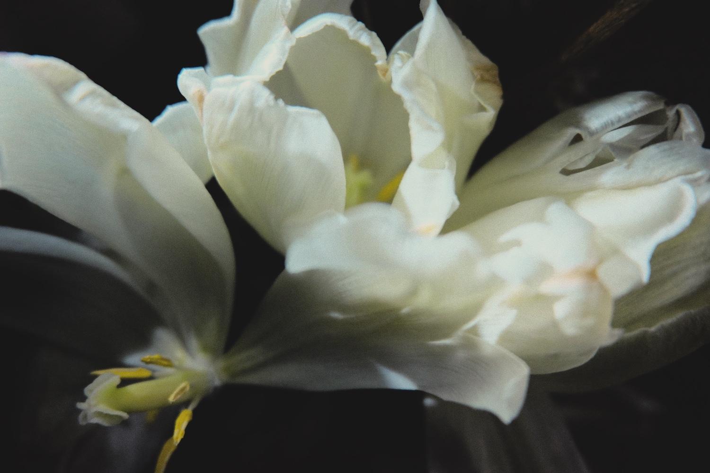 Photography image - Loading DSCF9403.jpg