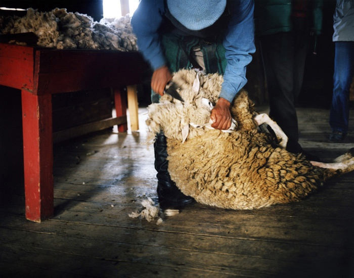 Art and Documentary Photography - Loading Travel_30_Sheep_Shearing_Patagonian_Estancia_Argentina.jpg