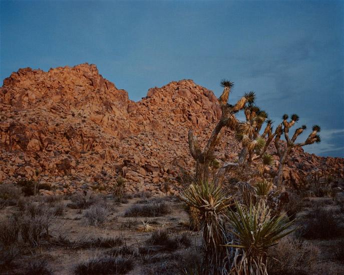 Art and Documentary Photography - Loading Travel_44_Joshua_tree_California.jpg