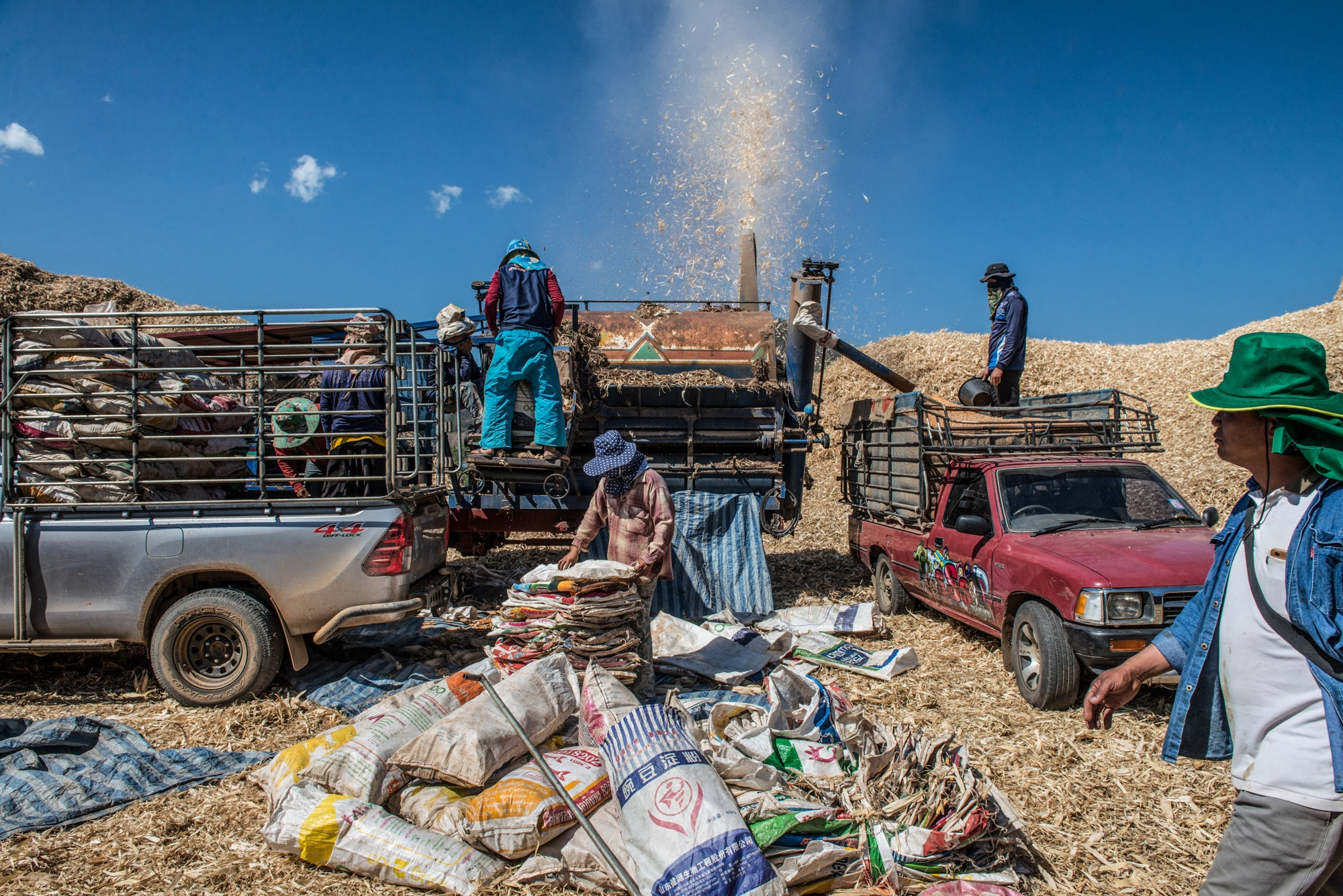 Farmers are milling corns after harvesting. They are the one who's been blamed for causing air pollution in the city in the smoke crises period in Northern Thailand.