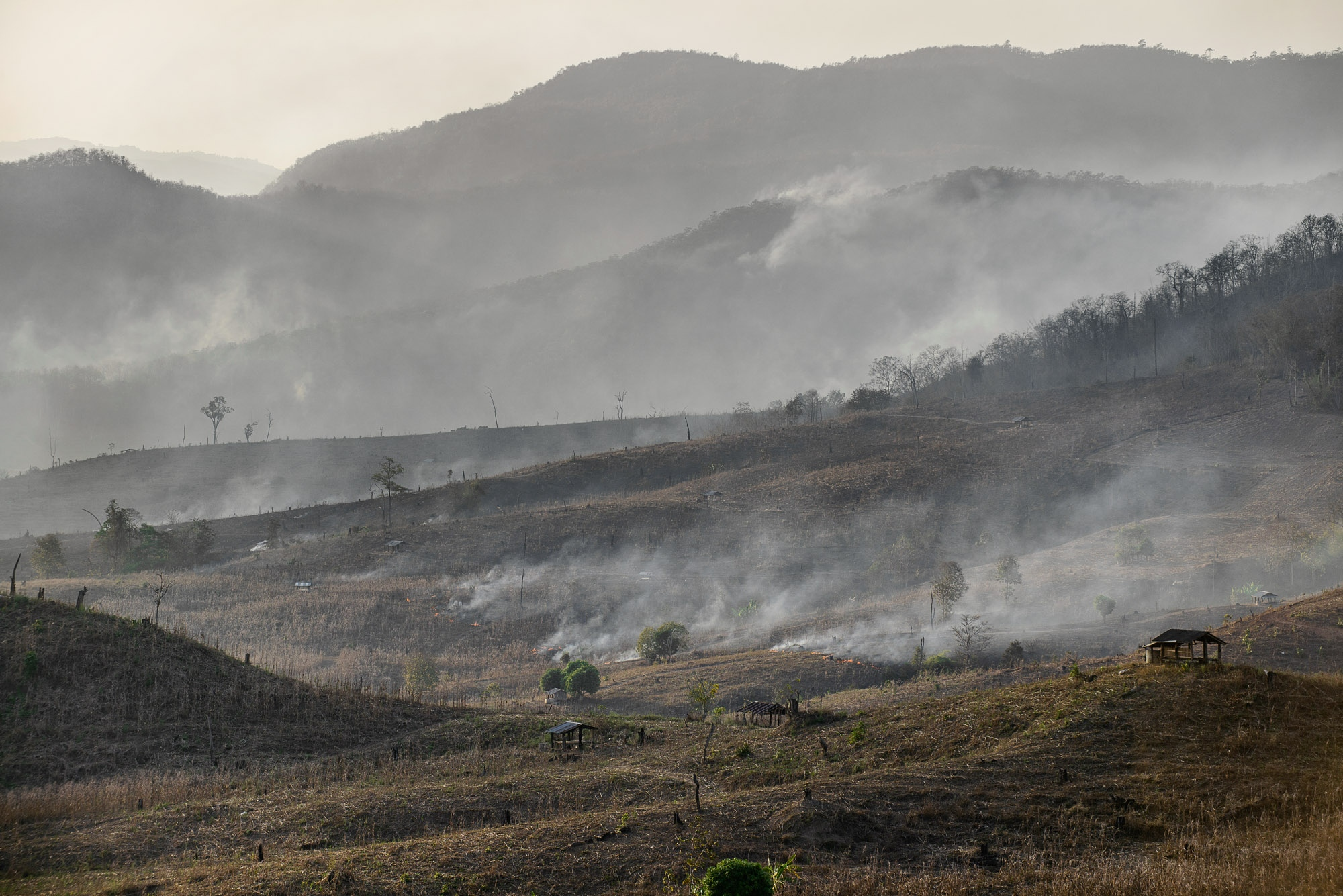 Thousands of acres of forest have been dedicated to mono- cropping system. The areas burned by wildfire each year appeared to start after crop harvesting. Stubble burning is a major reason for heavy smog and air pollution.