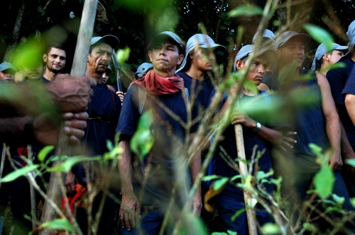 A group of men are working in manual eradication of Coca crops