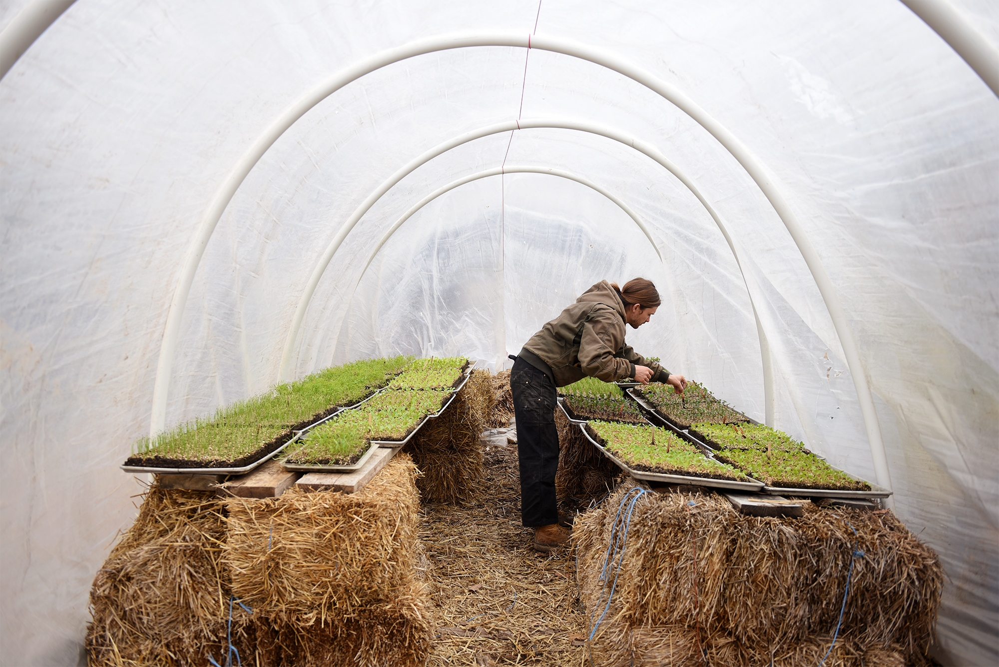 Tony Minnick checks some of the growing seedlings in the soil blocks at the Columbia Center for Urban Agriculture's urban farm on March 12, 2019 in Columbia. Minnick has been the urban farm's manager for about four seasons.