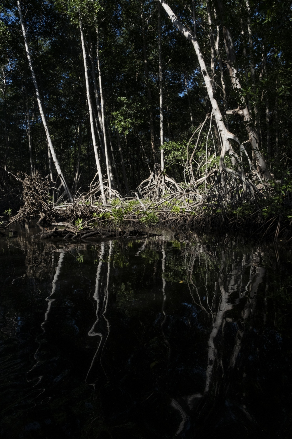 Because of rising sea levels and increased temperatures, La Barra de Santiago's mangrove ecosystem is slowly disappearing, impacting the community as a whole.