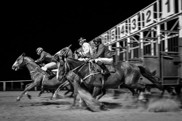 Horse track