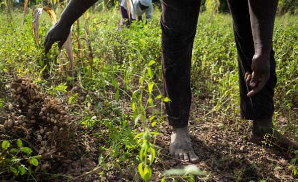 Underrated saviors, Adamawa, 2018
