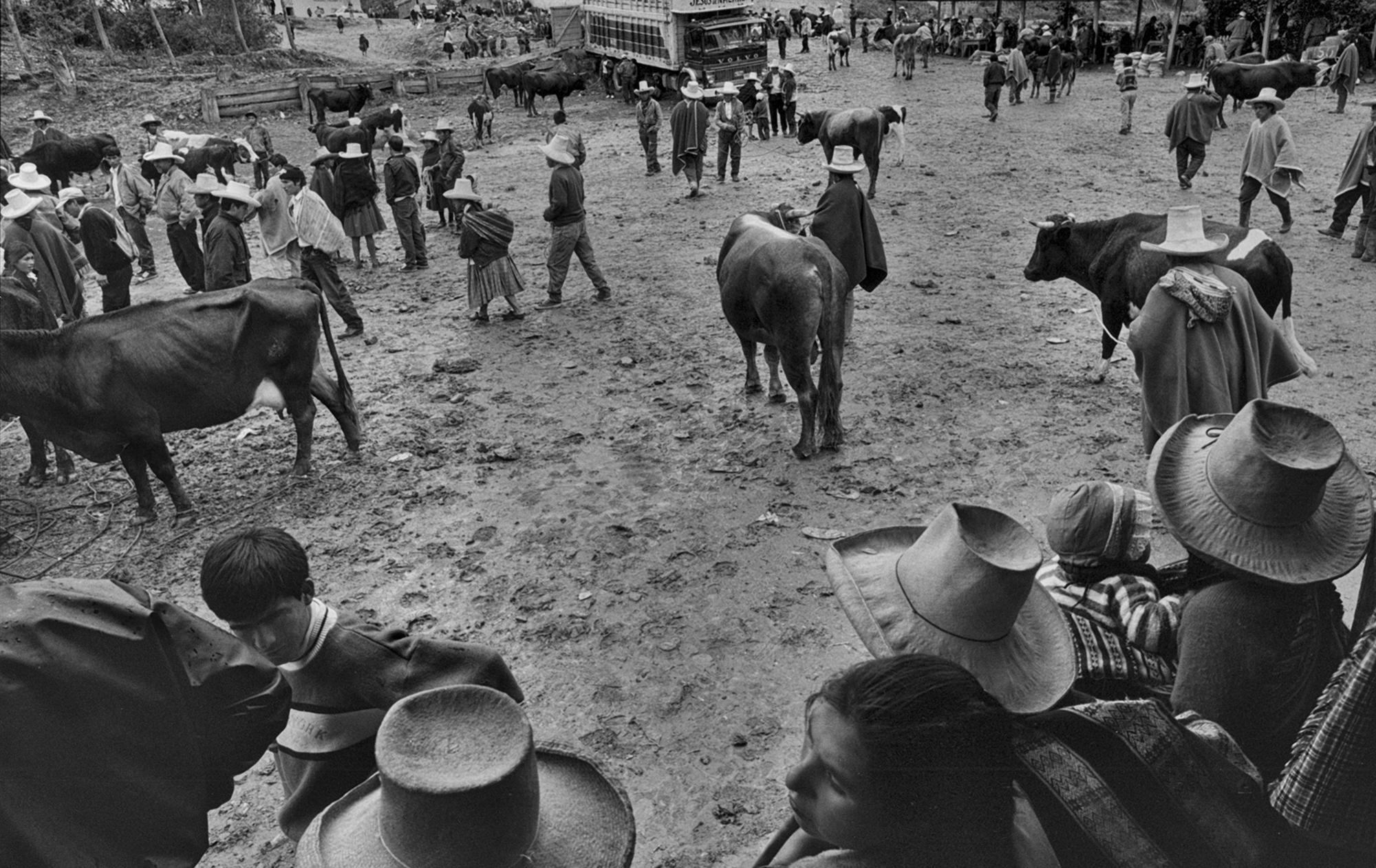 Animal Feria