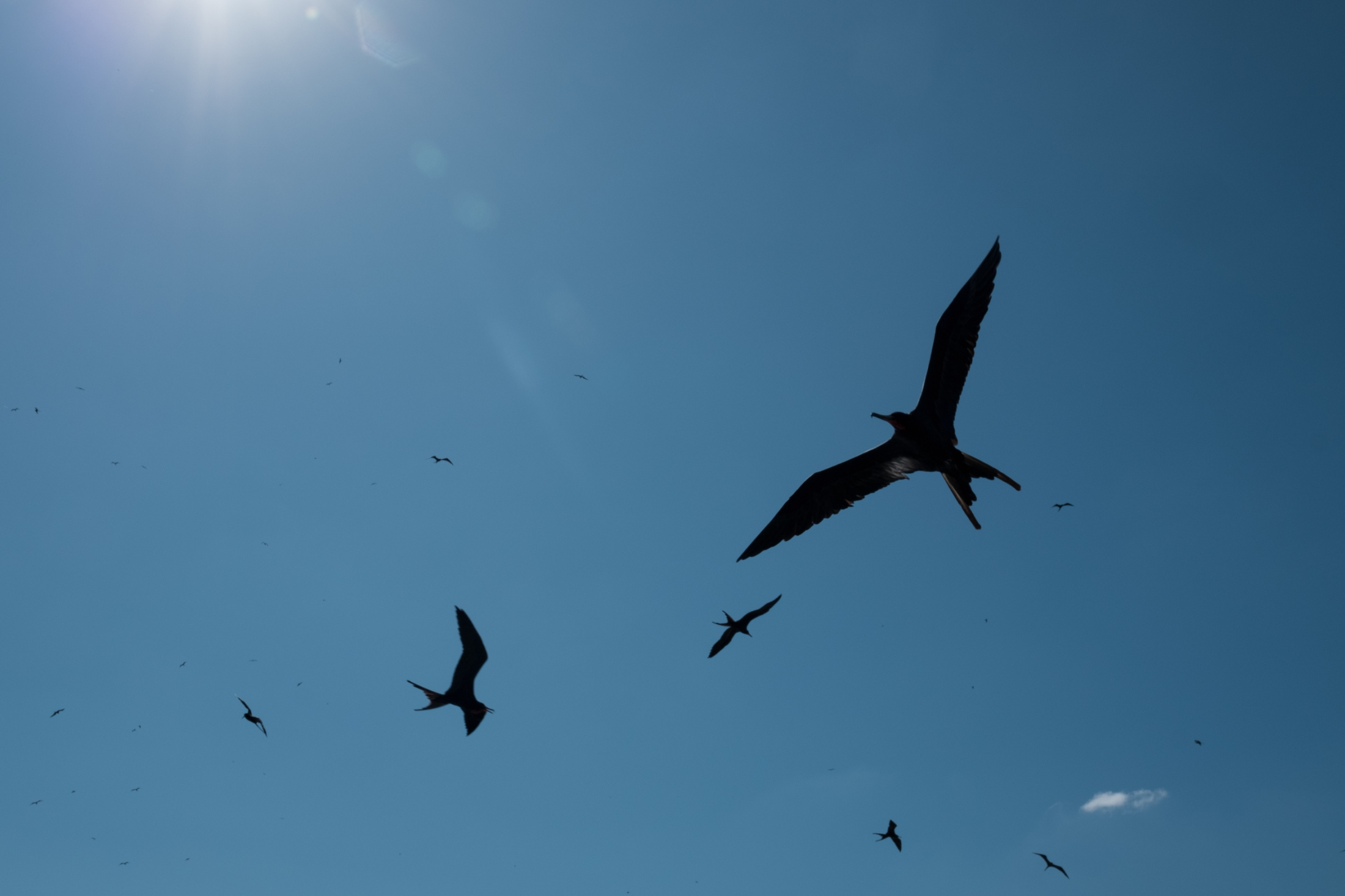 Cormorants constantly circle overhead for any fish scraps in the polluted waters.