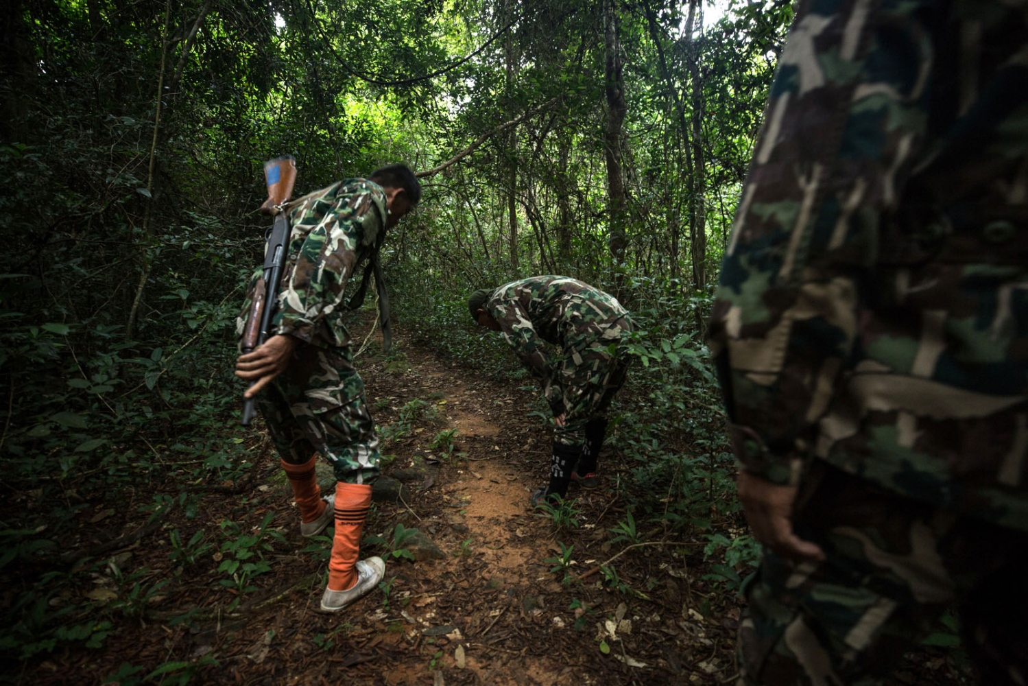 Thai forest rangers inspect a well known loggers path for footprints showing recent activity. Ta Praya National Park, Sa Kaew Province - September 2018