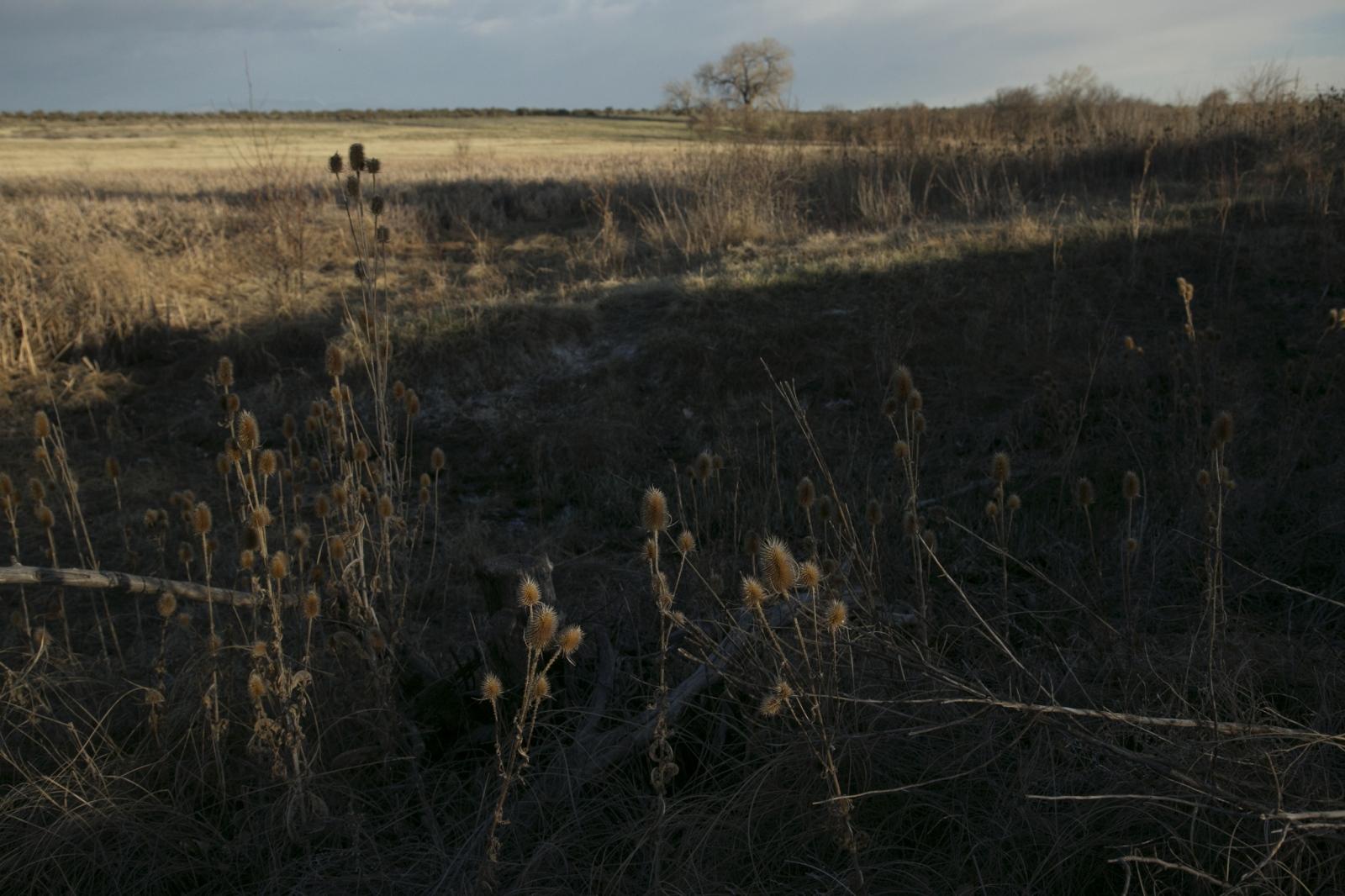 Photography image - Loading Ranchlands_webedit_14.JPG