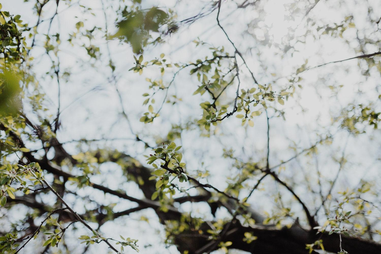 Photography image - Loading _MG_7271.jpg