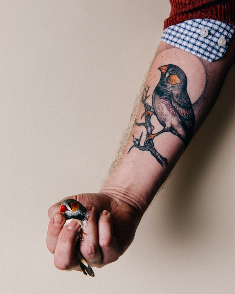 Photography image - Loading 286-Bloomberg-Finches-254.jpg