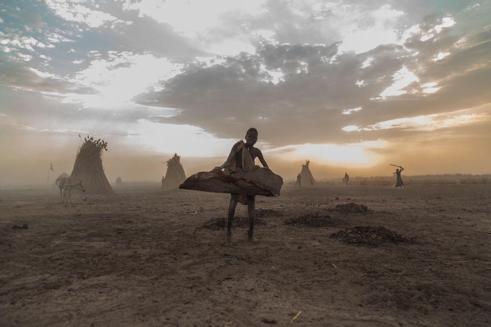 Photography image - A mundari boy collecting dung from cows at a cattle camp in South Sudan.