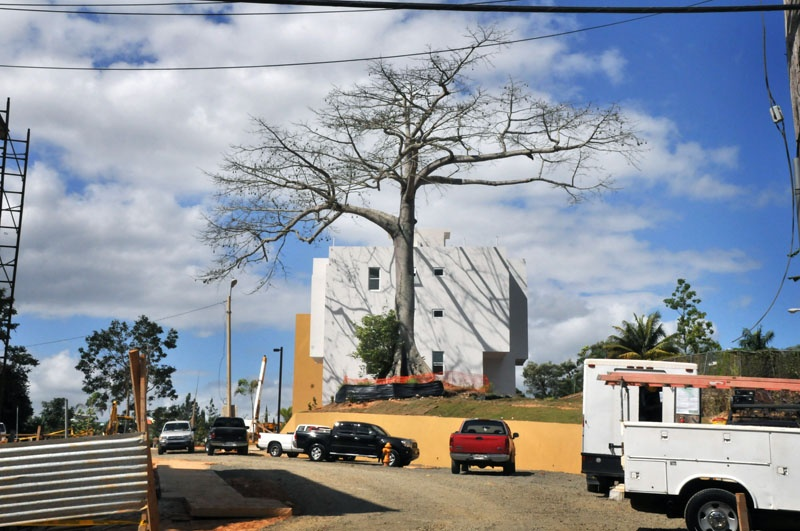 Art and Documentary Photography - Loading 70thebigtree.jpg