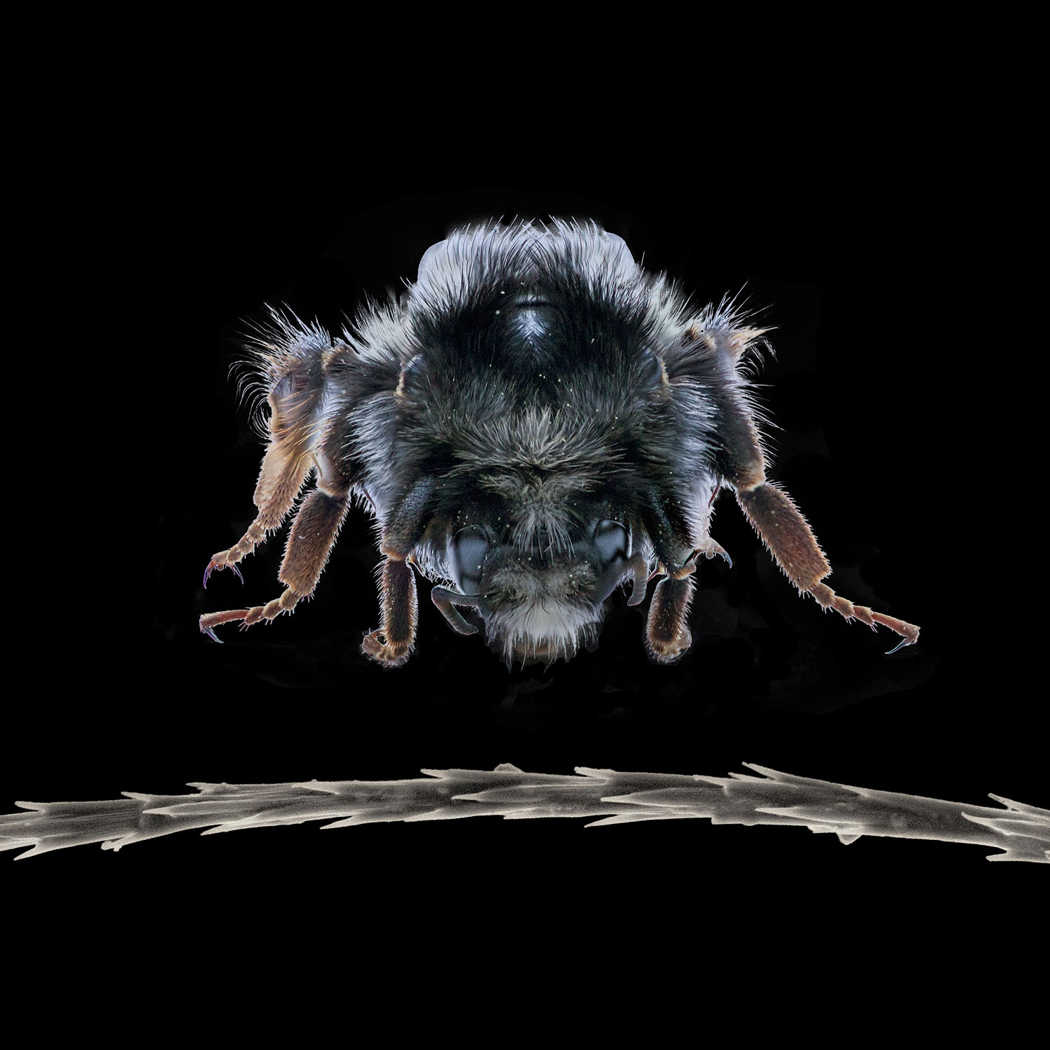 The decline of bees worldwide is well-documented, as is the threat to crops that rely on them for pollination. Little known is that natural fungal/mycelial extracts are being developed which boost bee immunity.