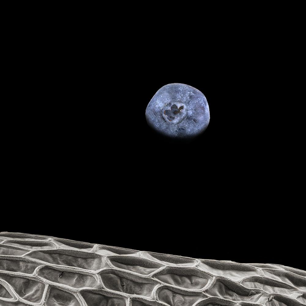 Photography image - Loading blueberryrise.jpg