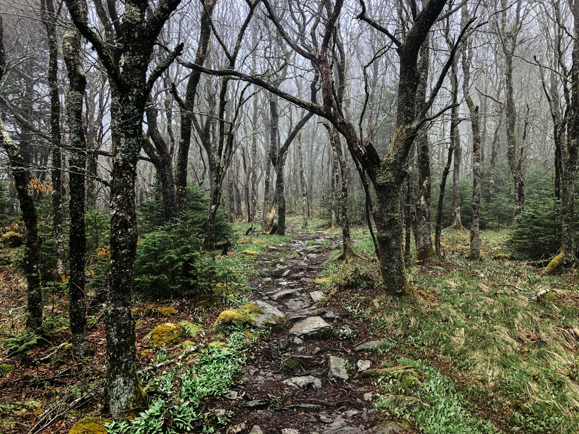 Outside Unicoi, Tennessee, Appalachian Trail 2018