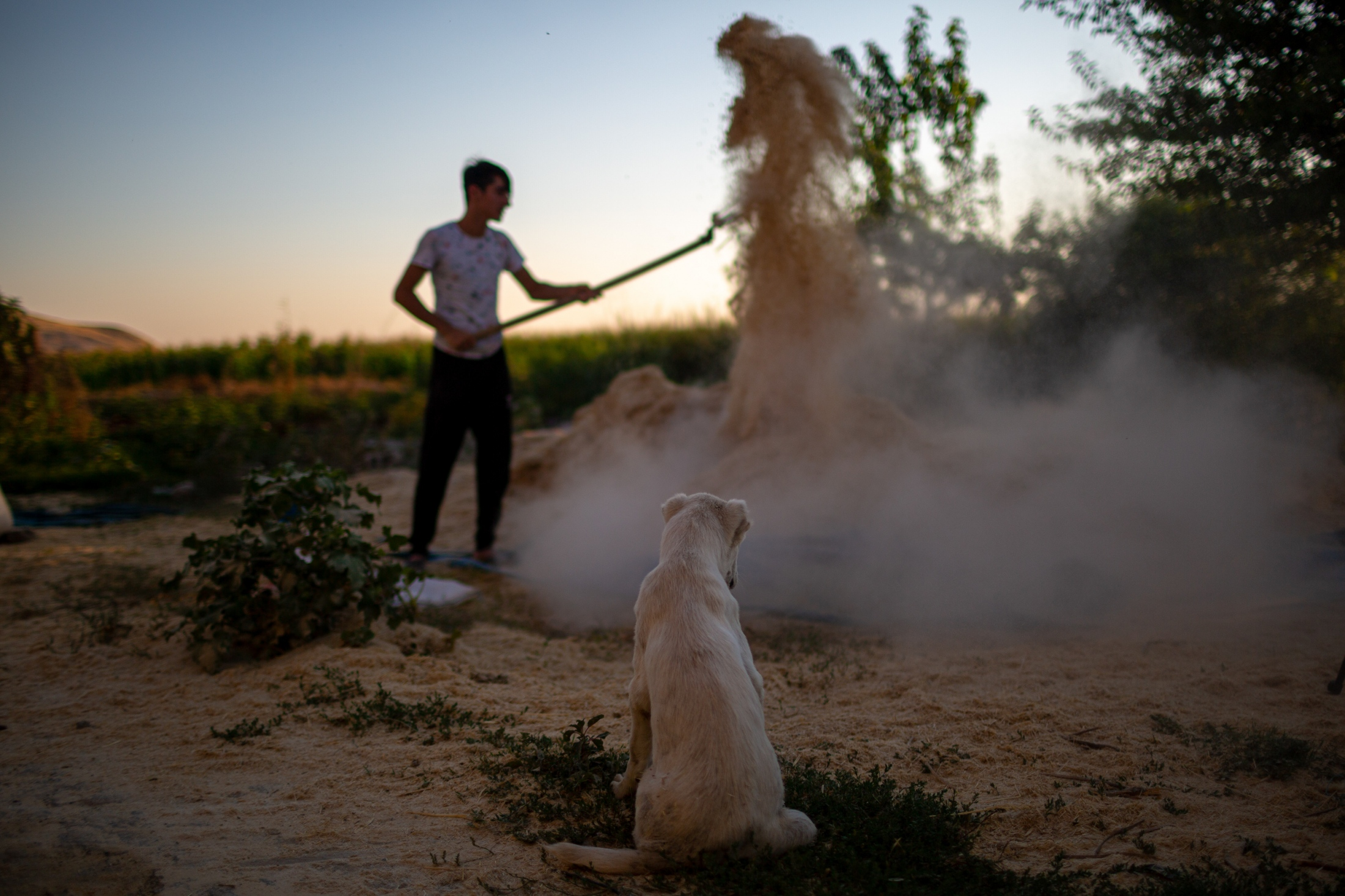 A puppy watches as a Kurdish farmer uses the wind to separate the grain from the chaff in a village near Hasankeyf. Their village along with Hasankeyf is slated be flooded once the waters arrive as the reservoir behind the Ilisu Dam fills. These residents have lived independently for generations: living off of the land, their cattle, their agriculture and various commercial enterprises.
