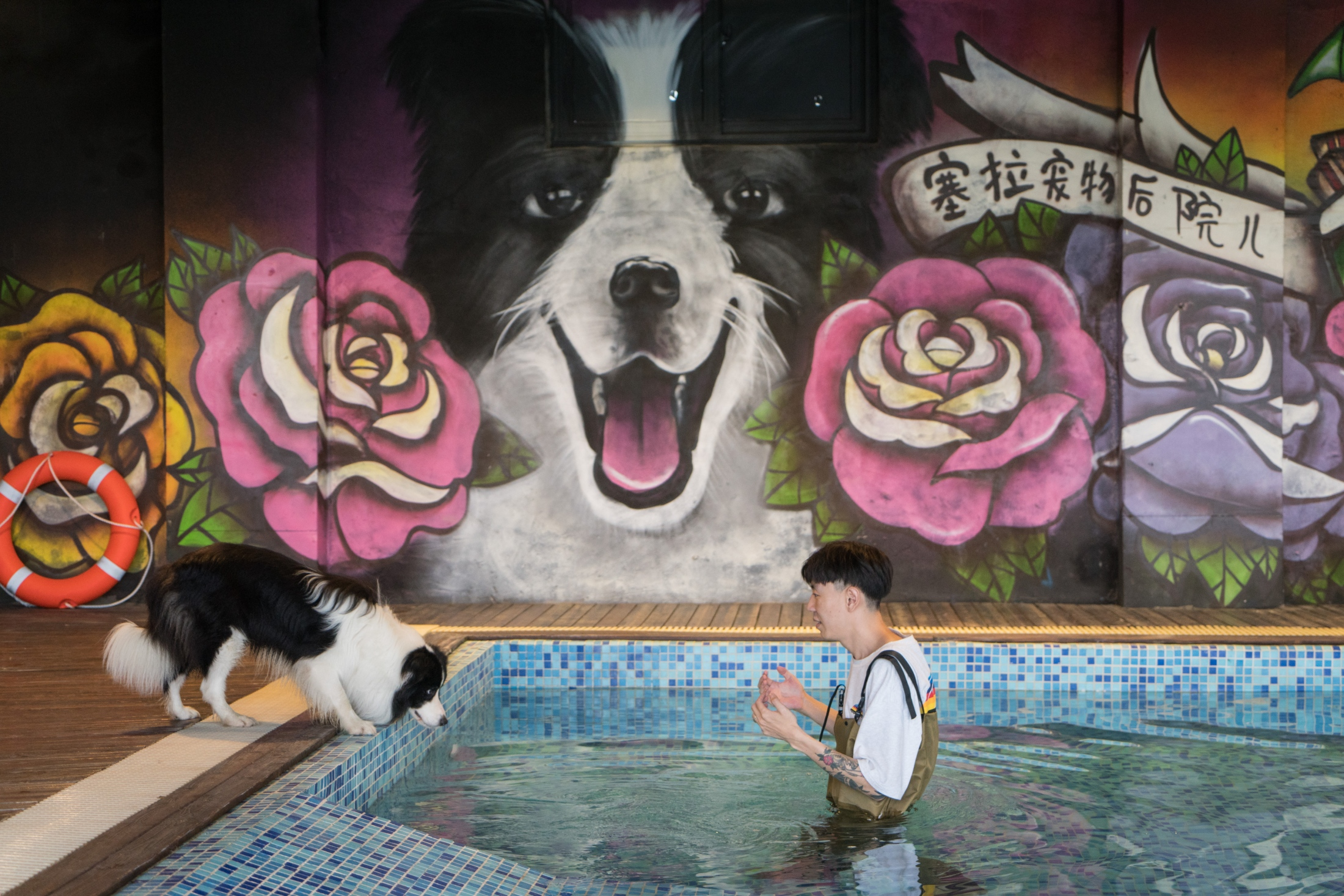 Zhou Tianxiao instructs his border collie, Sylar, to jump into the pool in his mansion in Beijing. Read story