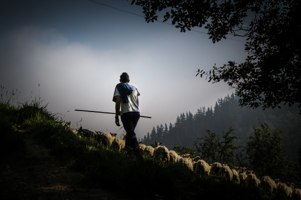 THE YOUNG BASQUE SHEPHERD