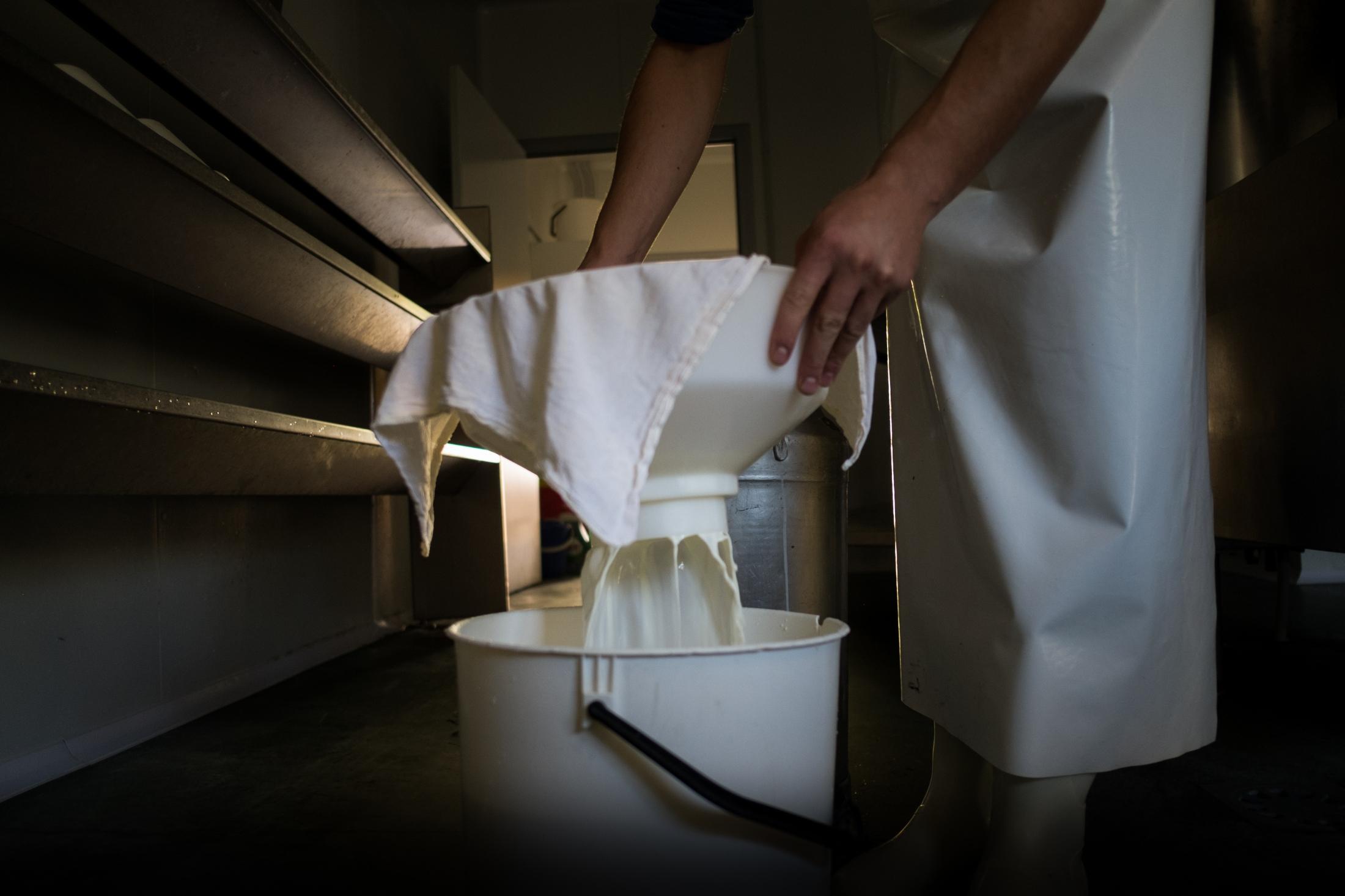 Filtering milk.