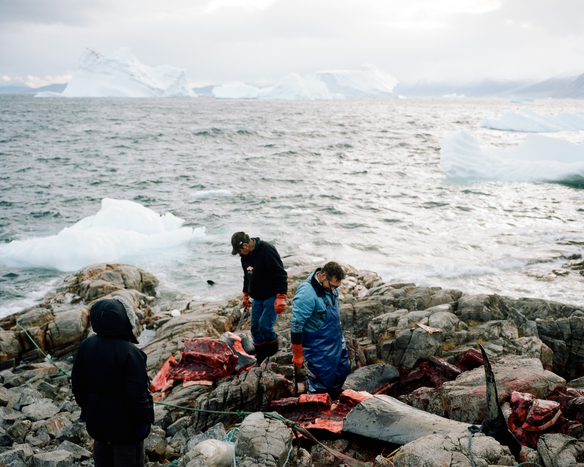 Pilot whales has been hunted then gathered toward the shore of Uummannaq to be slaughtered. Uummannaq is a hunter and fishermen village inhabited by 1282 souls (2013) and located 590 km above the polar circle on the Uummannaq island. Most of the young people do not want to become a fisherman nor a hunter.