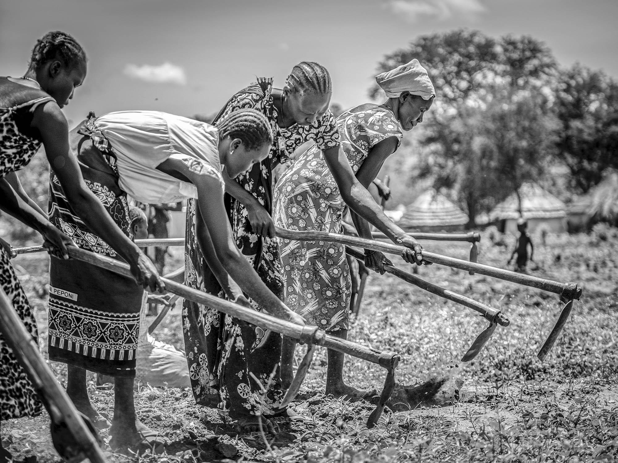 South Sudanese refugees till the earth to plant corn at Nymanzi refugee settlement in Adjumani district in Northern Uganda on May 3, 2017. Plots of land are allocated to grow food in order to alleviate the chronic shortage of aid.