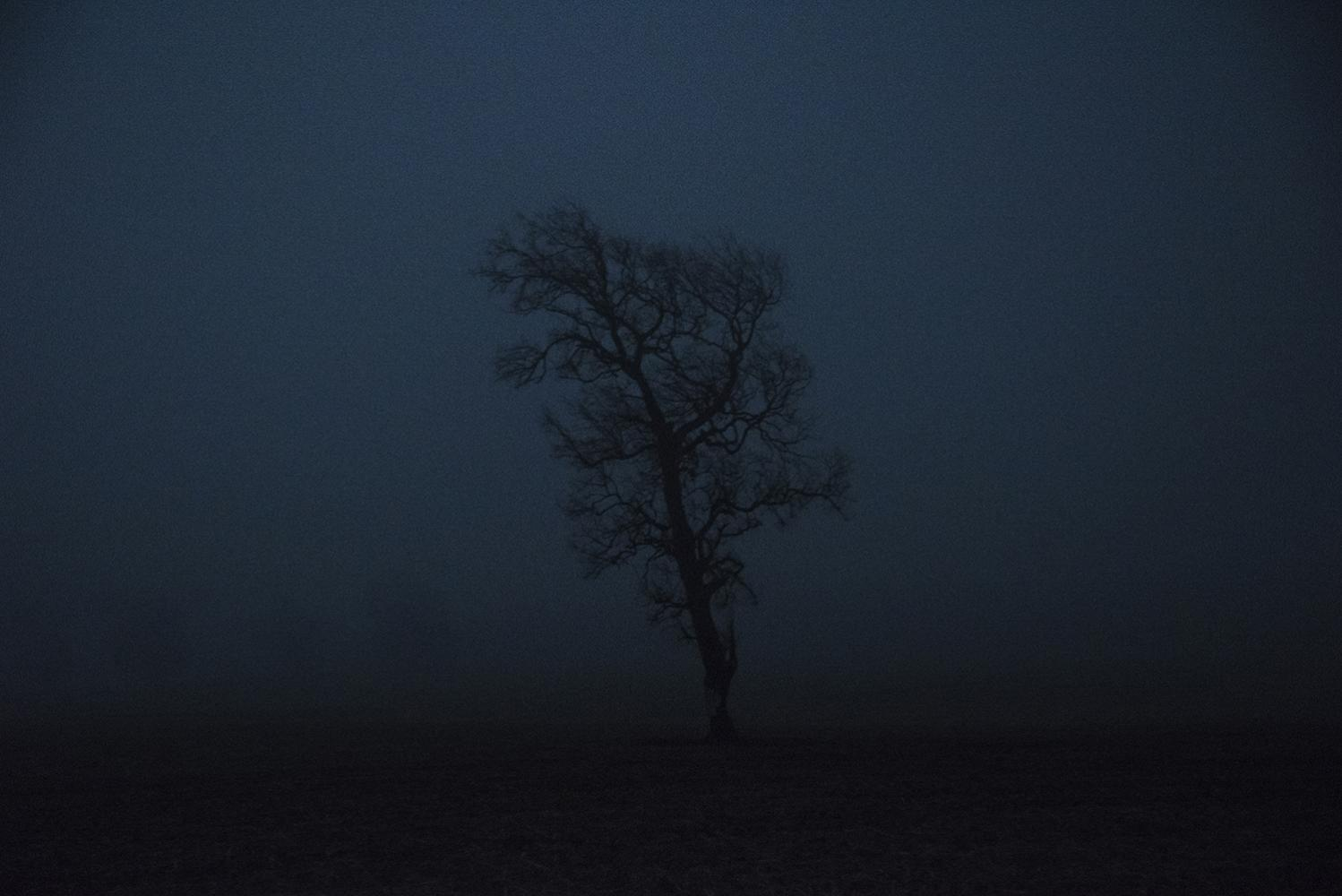 "A tree stands alone in a field near Collipulli, Araucania region. This area has been labeled as ""red zone"" due to the ongoing land conflict between the state, landowners and Mapuche communities. April 18th, 2019. Chile."