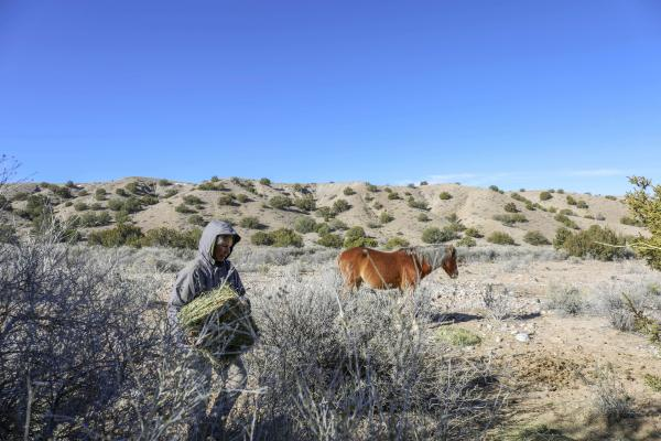 Amid Rancor, Advocates Scramble to Find Homes for Wild Horses