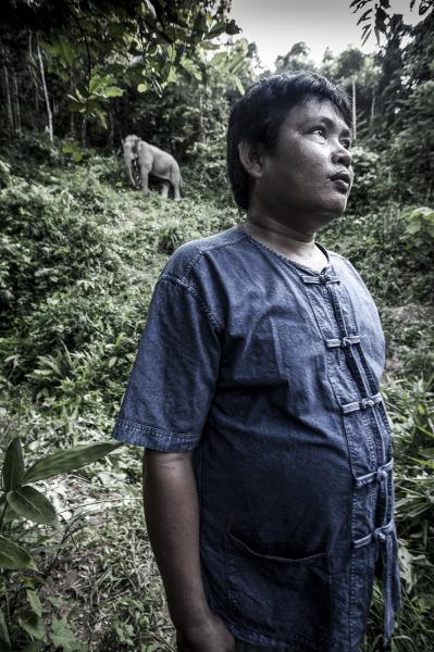 Mahout Kham with his elephant Seedor Yai at Boon Lotts Elephant Sanctuary, Baan Na Ton Jan, Tambon Baan Tuck, Si Satchanalai, Sukhothai, Thailand. Seedor Yai: (Mr Big) Stands 2.8 metres high and worked as a logging elephant in the North of Thailand.